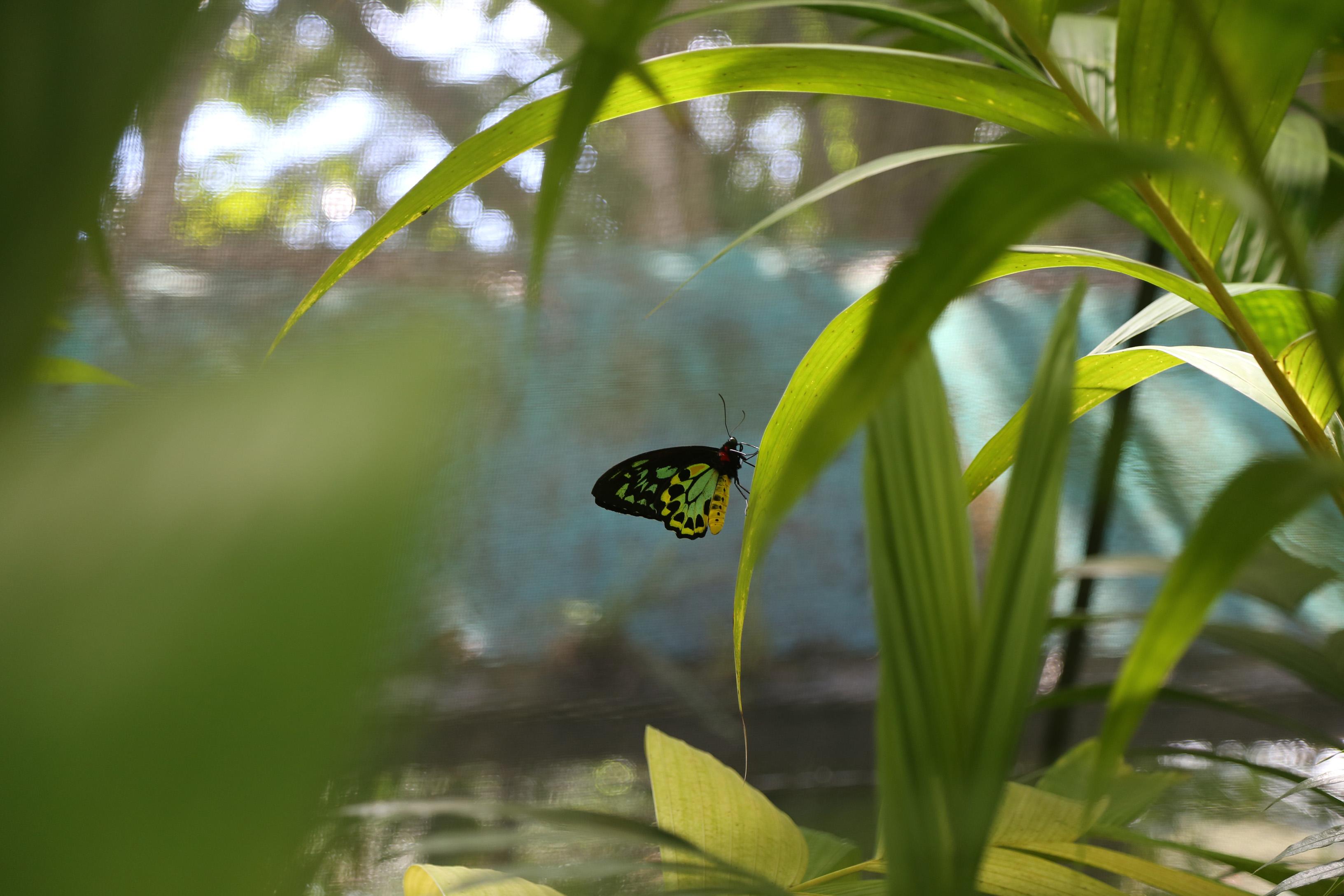 Schmetterling auf einem Blatt - Mitarbeiterbindung Wertschätzung